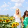 Girlfriends holding hands in sunflower field — Stock Photo