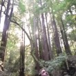 People in walking in forest  Redwoods — Stock Video #42000937