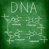 DNA chemistry structure on chalkboard — Stock Photo