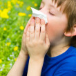 Stockfoto: Season allergy