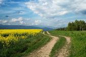 Field trip of rapeseed field — Stock Photo