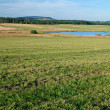 Mowed meadow with a pond — Stock Photo