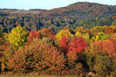 Vibrant color autumn forest — Stock Photo