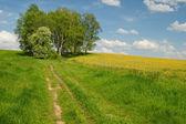 Polnej drodze do brzozowego gaju na horyzoncie — Zdjęcie stockowe
