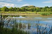 Overgrown pond — Stock Photo