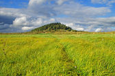 Meadow with tall grass — Stock Photo