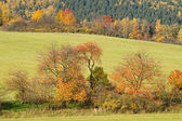 Trees with leaves in autumn colors on a meadow — ストック写真