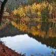 Trees with autumn leaves mirror above the surface of the pond — Stock Photo