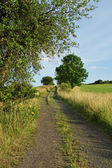 Rural road between meadows lined with trees — Stock Photo