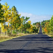 Asphalt road among trees with leaves in autumn colors — Stock Photo #39910891