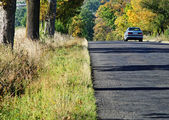 Asphalt road among trees with leaves in autumn colors — Stock Photo