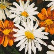 Daisy flowers strokes on paint picture (macro) — Stock Photo