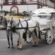 Two white horses in team with carriage — Stock Photo