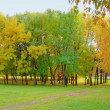 Autumn trees — Stock Photo #20879321