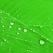 Royalty-Free Stock Photo: Leaf with water drops