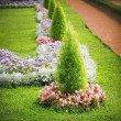 Foto Stock: Flowerbed