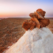 Desert rose — Stock Photo