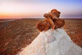 Rosa del deserto — Foto de Stock