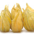 Physalis — Stock Photo #21012301