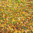 Fallen leaves — Stock Photo #21013187