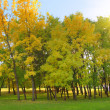 Autumn trees — Stock Photo #21013205