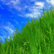 Sky and grass - Stock Photo