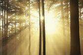 Sun rays — Stock Photo