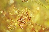 Damla ile bitki — Stok fotoğraf