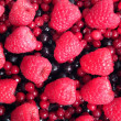 Berries — Stock Photo #21193999