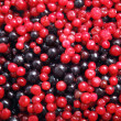 Berries — Stock Photo #21194001