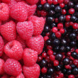 Berries — Stock Photo #21194033