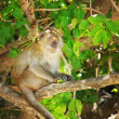 Stock Photo: Monkey on tree