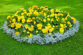 Flowerbed — Stockfoto