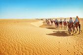Tourists on camel — Stock Photo