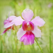Pink orchid — Stock Photo #24986579