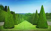 Topiary — Stock Photo