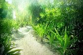 Sandy path to the beach — Stockfoto