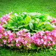 flowerbed — Stock Photo