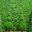 Topiary — Stock Photo