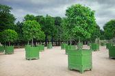 Orange trees — Stock Photo