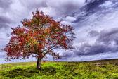 Beautiful nature — Stock Photo