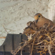 Stock Photo: Nesting Doves