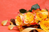 Background with yellow roses — Stock Photo