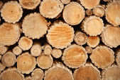 Wooden cross sections — Stock Photo
