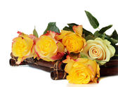 Yellow roses on a white background — Stock Photo