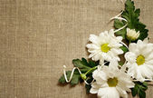 Chamomile composition on canvas — Stock Photo