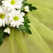 Stock Photo: Daisies on organza
