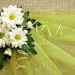 Daisies and green organza — Stock Photo