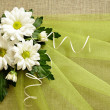Daisies and green organza — Foto Stock