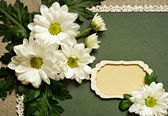 Chamomile arrangement and a card — Stock Photo